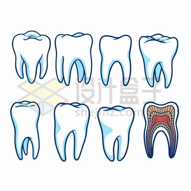 黑色线条蓝白色牙齿和内部结构图png图片素材