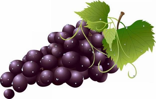 带叶子的一串夏黑葡萄png图片素材