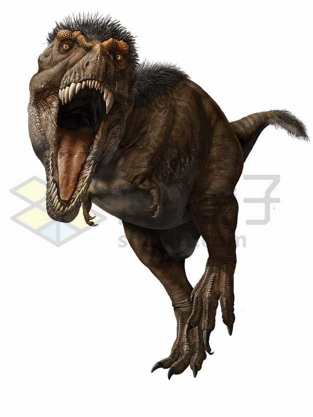 张嘴咬过来的长毛的霸王龙大型食肉恐龙png图片免抠素材