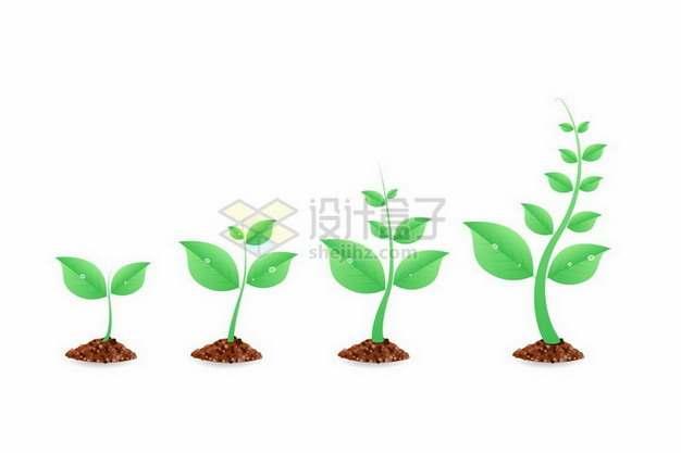 翠绿色的植物发芽的四个阶段植树节png图片免抠矢量素材