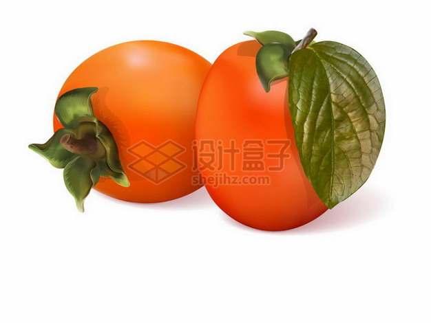 两颗红色柿子美味水果png图片免抠矢量素材