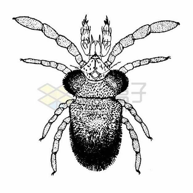 黑色素描螨虫png图片素材