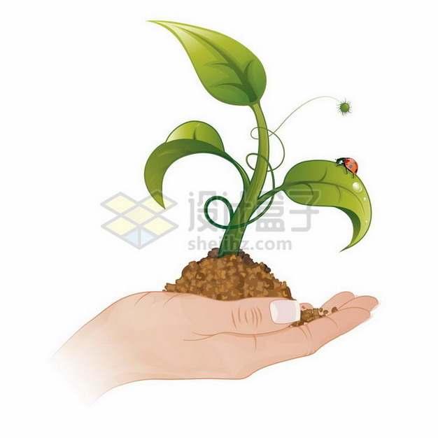 手捧泥土中冒出的植物发芽png图片免抠矢量素材