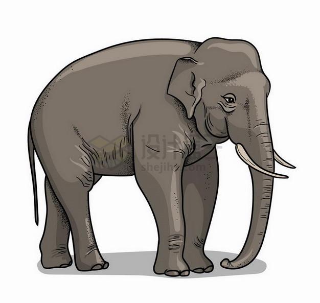 手绘插图大象野生动物png图片免抠矢量素材 生物自然-第1张