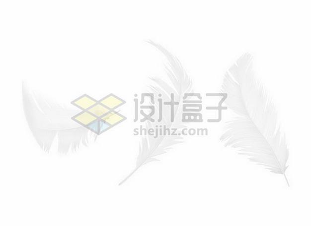 3款逼真的白色羽毛鸟毛png图片素材 漂浮元素-第1张