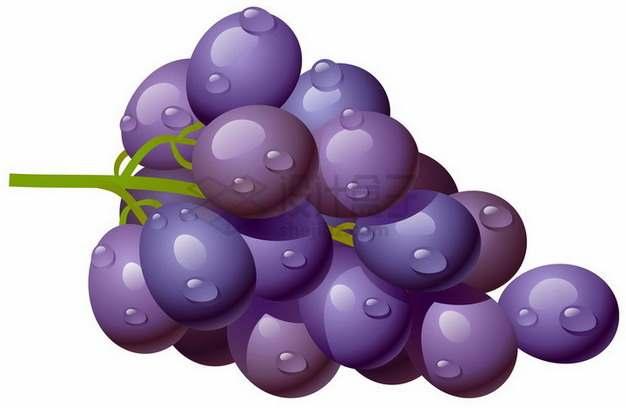 一串带水珠的金星无核葡萄紫葡萄png图片素材