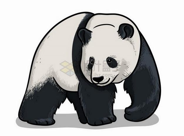 手绘插图大熊猫野生动物png图片免抠矢量素材 生物自然-第1张