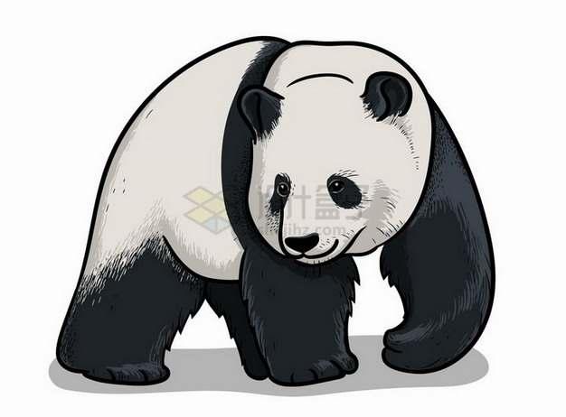 手绘插图大熊猫野生动物png图片免抠矢量素材