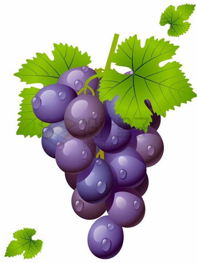 带水珠和叶子的紫色葡萄赤霞珠葡萄png图片素材