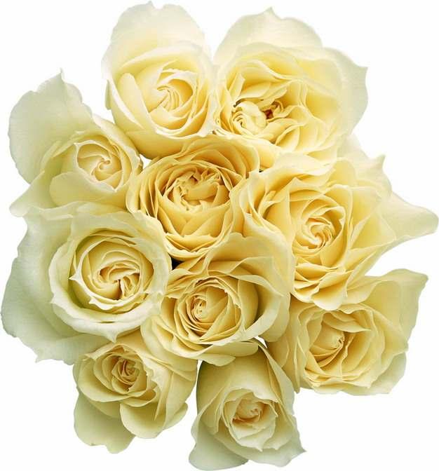 一束黄玫瑰花鲜花淡黄色花朵89320png图片素材