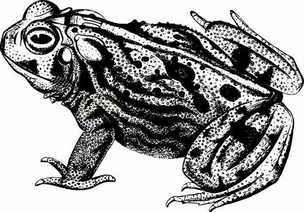黑色手绘风格癞蛤蟆蟾蜍png图片素材