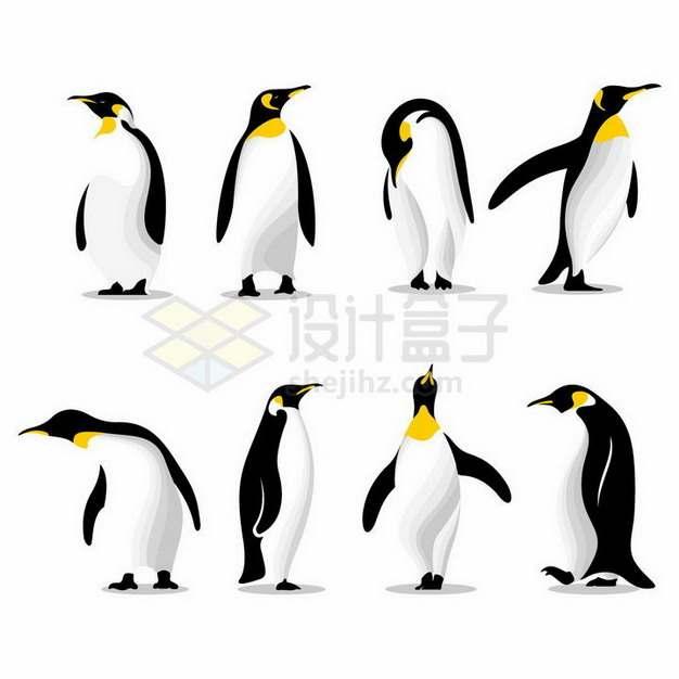 8款不同形态的南极帝企鹅png图片免抠矢量素材