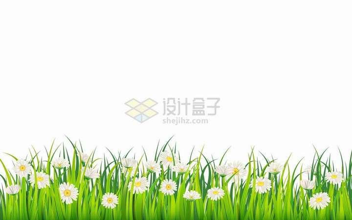 绿油油的青草地和盛开的雏菊白色花朵png图片免抠eps矢量素材