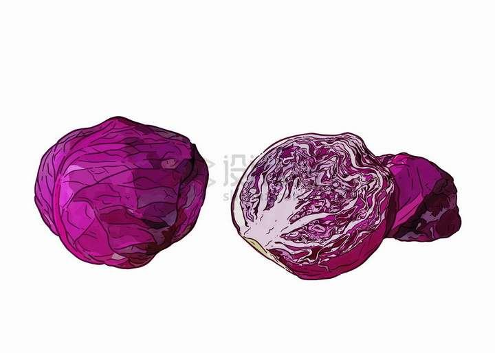 手绘风格切开的紫甘蓝美味蔬菜png图片免抠矢量素材
