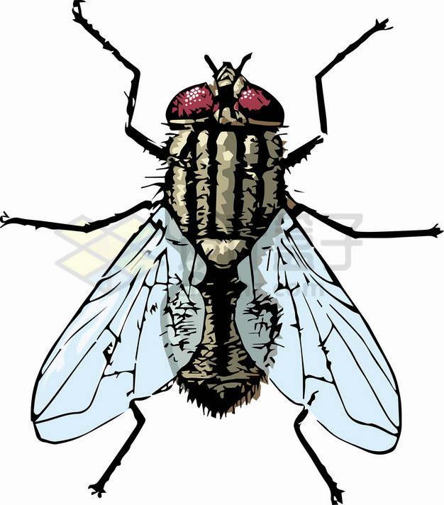 俯视视角的彩绘苍蝇png图片素材