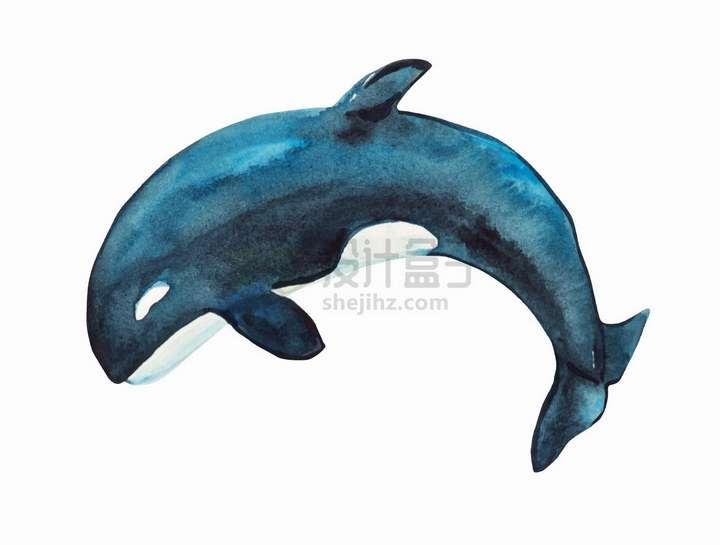 水彩画虎鲸艺术插画png图片免抠矢量素材