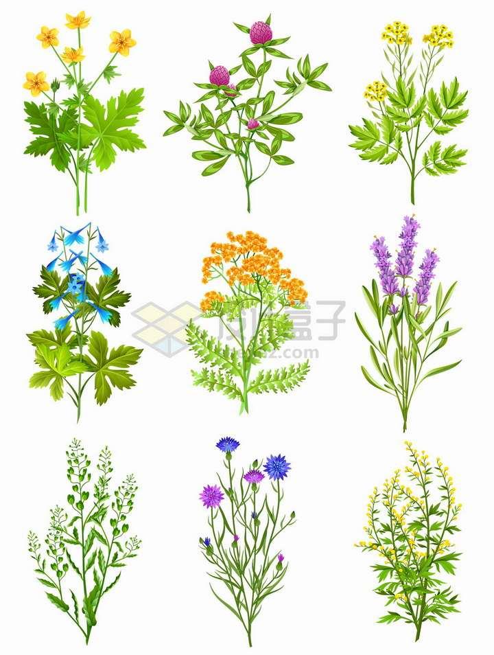 9款路边的小花美丽花朵png图片免抠矢量素材