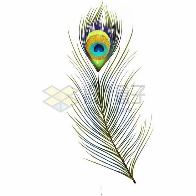 漂亮的孔雀羽毛4293210png免抠图片素材 生物自然-第1张