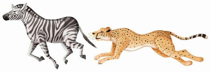 捕食斑马的猎豹非洲大草原野生动物png图片免抠eps矢量素材