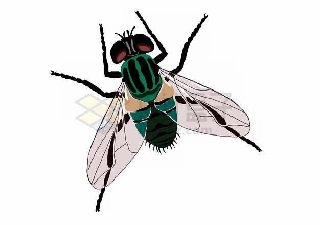 彩绘绿头苍蝇png图片素材