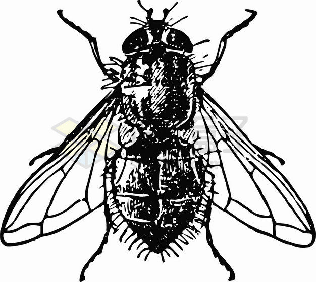 黑色素描苍蝇png图片素材