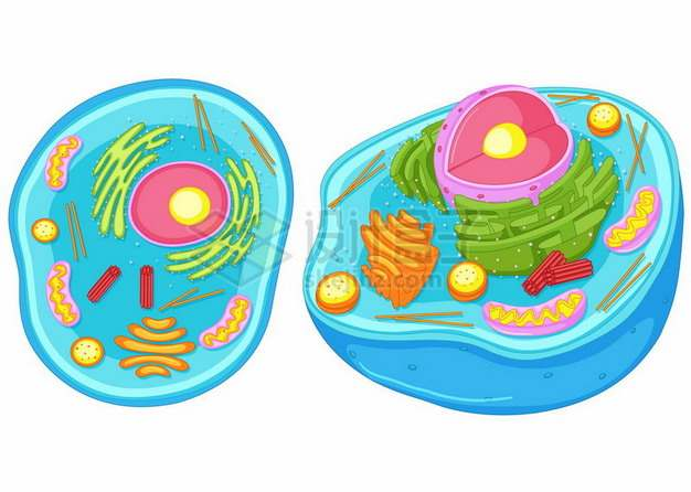 蓝色的卡通细胞解剖图内部结构图细胞核线粒体等617637png图片素材