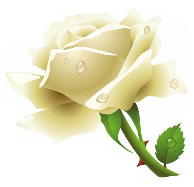 带水珠的白玫瑰花鲜花983915png图片素材