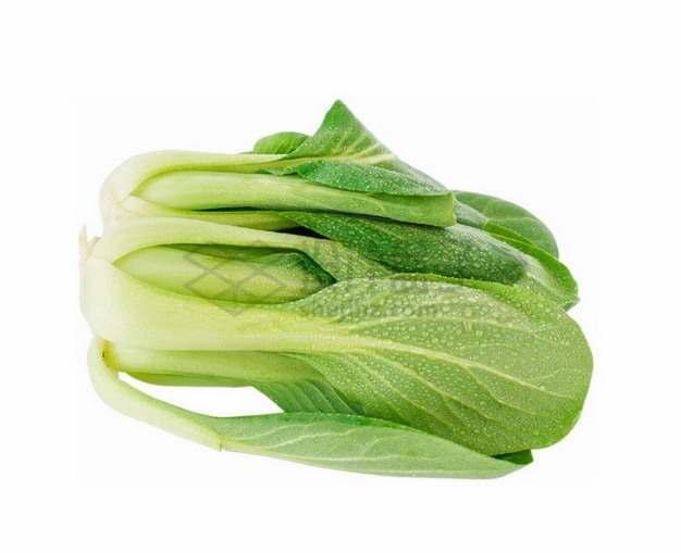 带露水的青菜png免抠图片素材