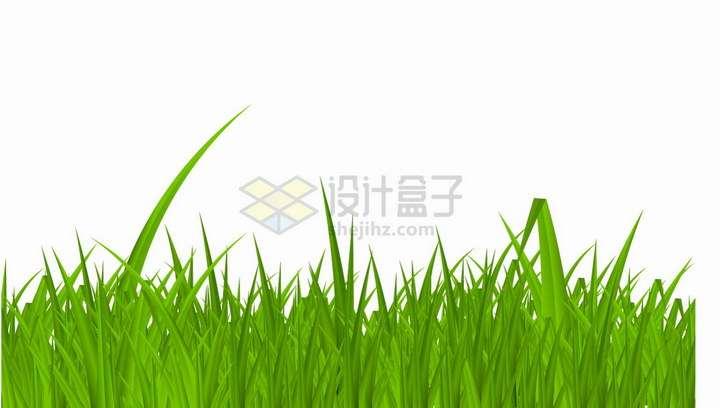 绿油油的青草地草丛装饰png图片免抠矢量素材