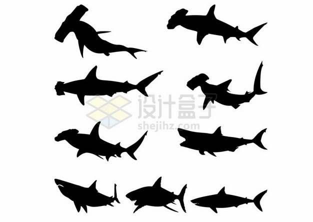 各种锤头鲨大白鲨等鲨鱼动物剪影312195png图片素材