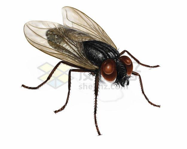 一只大眼睛苍蝇png图片素材