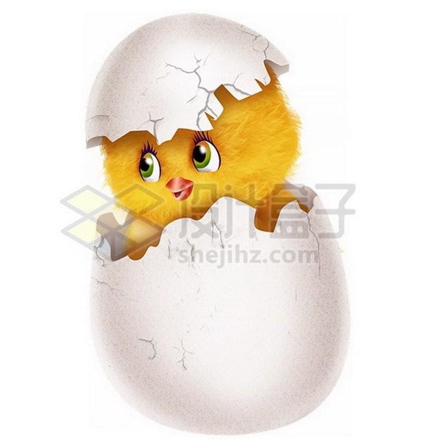 超可爱刚出壳的小黄鸡png免抠图片素材 生物自然-第1张