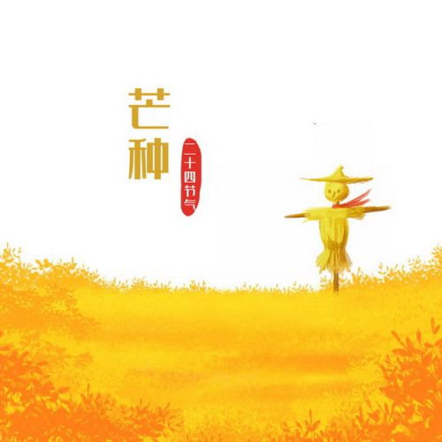 芒种节气黄色的田野和稻草人png免抠图片素材