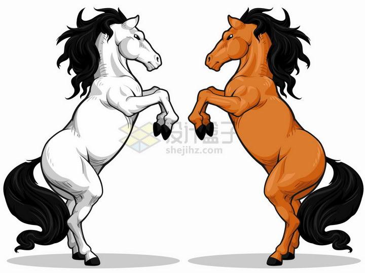 扬起前蹄的白马和棕马两匹骏马png图片免抠矢量素材
