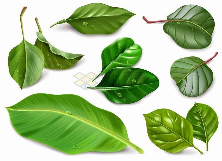 各种逼真的绿油油的树叶png图片免抠eps矢量素材