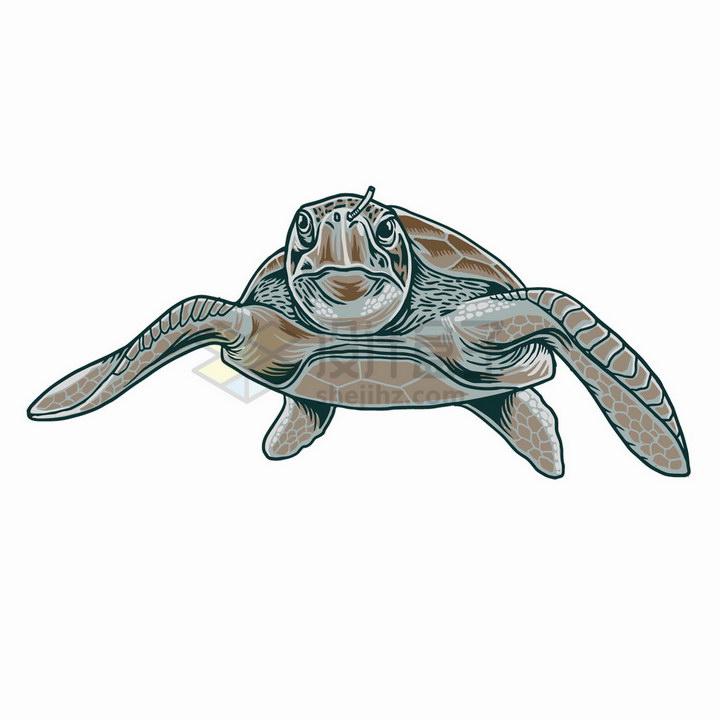 海龟鼻子上插了一根吸管海洋垃圾污染保护环境png图片免抠矢量素材
