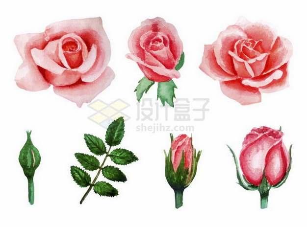 彩绘风格玫瑰花和花苞叶子等png图片免抠矢量素材