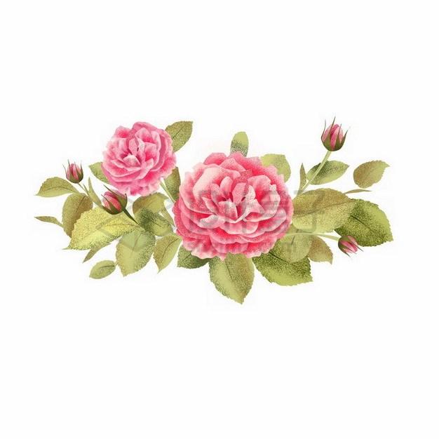 盛开的玫瑰花彩色插画8903232png免抠图片素材 生物自然-第1张