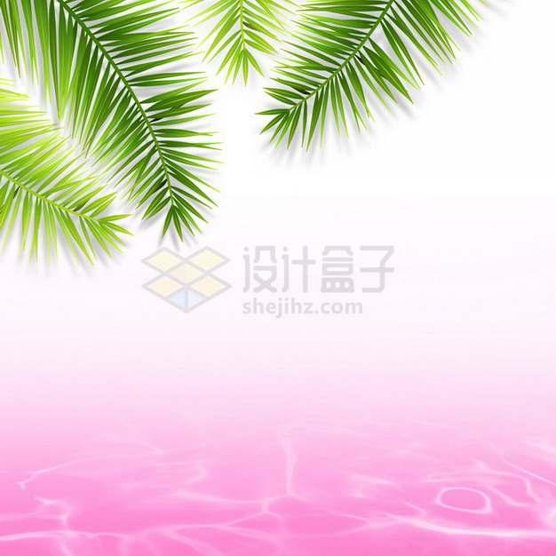 夏天的热带椰树叶和粉红色水面效果8643675png图片素材