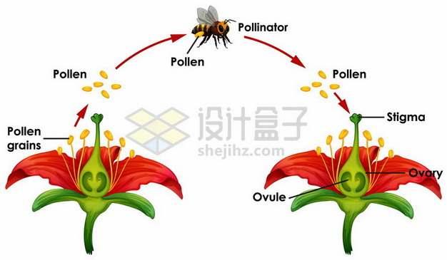 蜜蜂采蜜给花朵授粉传播花粉示意图818900 png图片素材