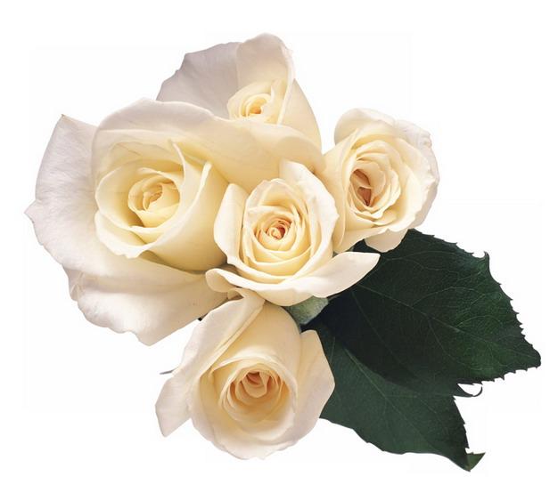 一束黄玫瑰花鲜花淡黄色花朵792754png图片素材