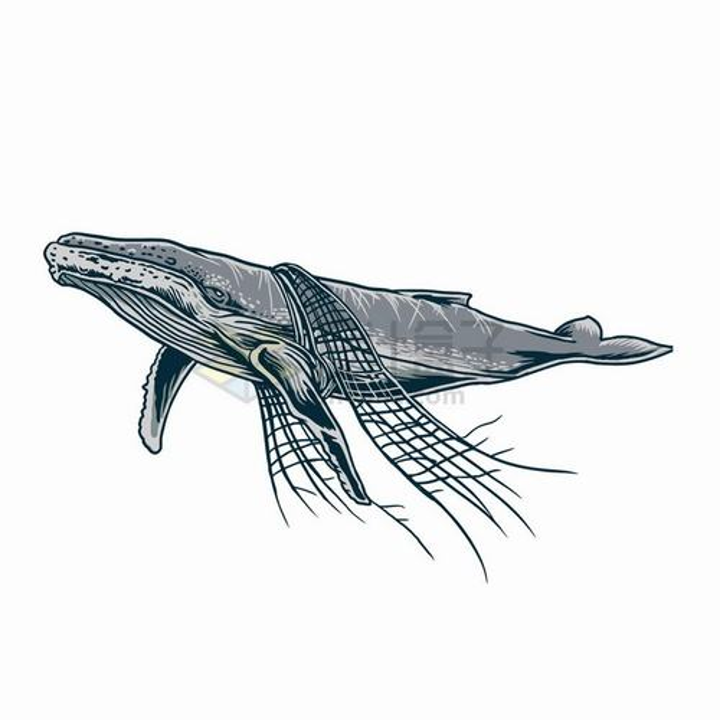 鲸鱼身上挂着渔网海洋垃圾污染保护环境png图片免抠矢量素材
