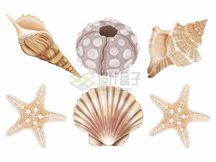 海螺海星扇贝等珊瑚礁动物png图片免抠矢量素材