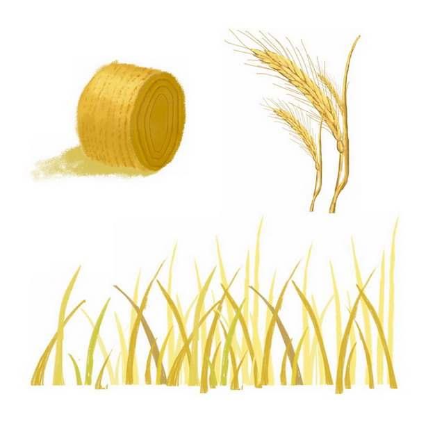 芒种麦子麦穗小麦稻草插画png免抠图片素材