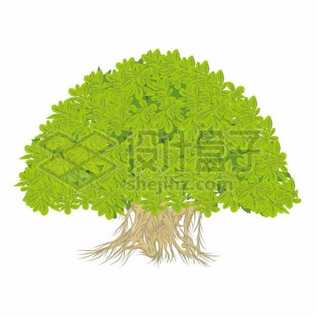 郁郁葱葱的大树绿树png图片素材202185