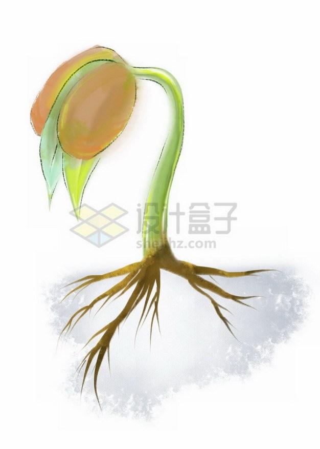 豆子发芽了432113png免抠图片素材 生物自然-第1张