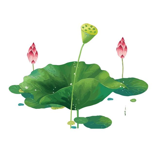 巨大的绿色荷叶和荷花花苞莲蓬703033png图片素材