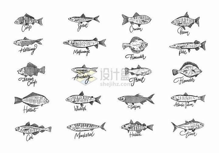 20款线条手绘风格海洋鱼类水产品png图片免抠矢量素材 生物自然-第1张