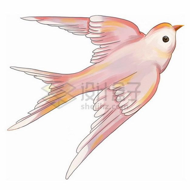 粉色的燕子雨燕插画png免抠图片素材 生物自然-第1张