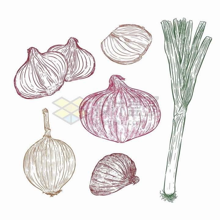 手绘素描风格洋葱和大蒜png图片免抠矢量素材
